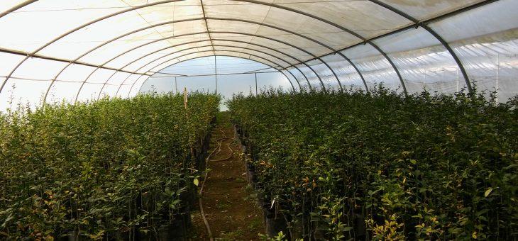 Novedades en la comercialización de plantas cítricas