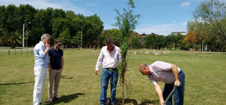 Nuevos árboles en el Paseo Público