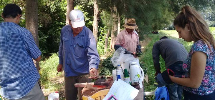 Rosas identificadas y libre de virus desde San Pedro