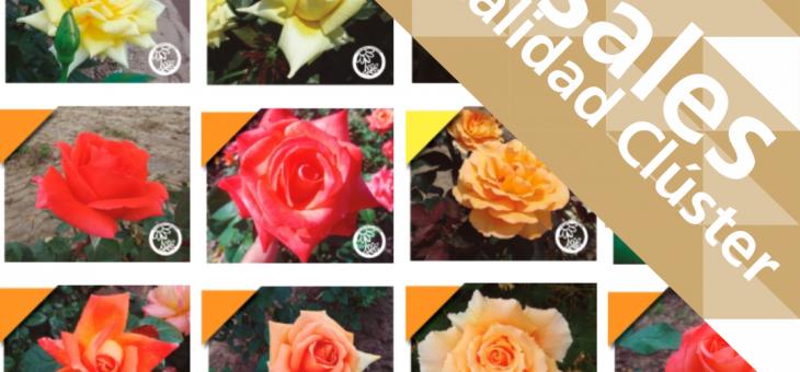 Ya están disponibles los rosales de sanidad controlada en San Pedro