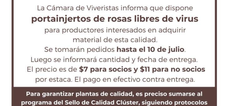 Interesados en portainjertos de rosas libres de virus de San Pedro