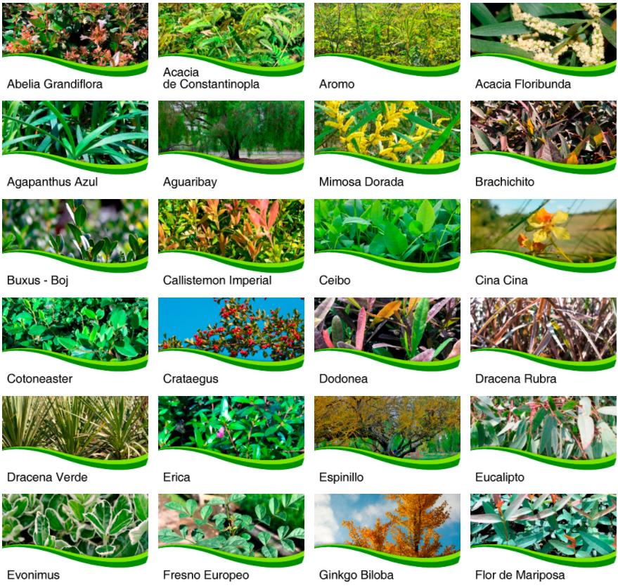 Catálogo de 48 plantas forestales y arbustivas con acceso por especie y productor